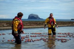 RNLI Ducks at North Berwick